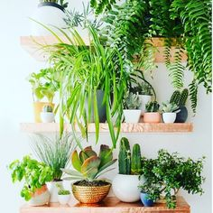 Plant shelf goals