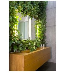 vine grows around mirror in bathroom in nyc penthouse