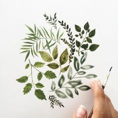 plante illustration watercolor