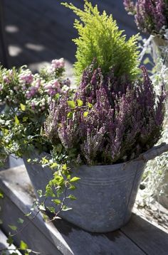 Fall planter- heather in galvanized pots Fall Planters, Garden Planters, Container Plants, Container Gardening, Vegetable Boxes, Outside Decorations, Autumn Decorations, Fall Containers, Small Outdoor Spaces