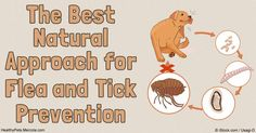 Fleas and ticks are very different pests, each with their own set of risks. Find out how you can prevent these pests from plaguing your pets. http://healthypets.mercola.com/sites/healthypets/archive/2016/07/02/flea-and-tick-prevention.aspx