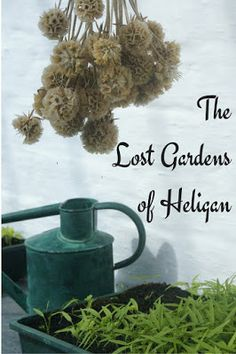 A Green and Rosie Life: The Lost Gardens of Heligan