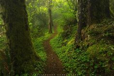 Hobbit Trail by Jeff Hobson