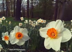 Could it be more beautiful!?  Kindly follow me :) #spring #kassel #flowers  #frühling . .  Taken by me @ramy.m.photography . .  #germany #deutachland #cassel #trees #Photography #photo #like4like #travelphotography #travelgram #tourism #view#beautiful #beauty #syrian #كاسل #ألمانيا # #ربيع #ورود #ازهار #منظر_طبيعي #تصوير