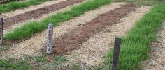 How To Plant A Cover Crop This Fall! Video Included!