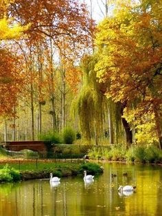 The Château de Cheverny is located at Cheverny, in the département of Loir-et-Cher in the Loire Valley in France. Beautiful World, Beautiful Places, Beautiful Pictures, Belle France, Autumn Scenery, Autumn Lake, Soft Autumn, Autumn Trees, Autumnal