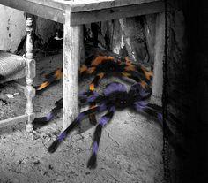 Spinnen und Gruseltiere