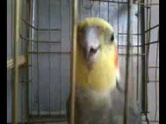YouTube Parrot, Bird, Youtube, Animals, Parrot Bird, Animaux, Parrots, Birds, Animal
