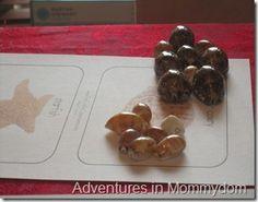 seashell classification