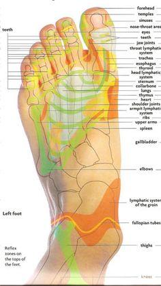 regions on feet correspondent to organs