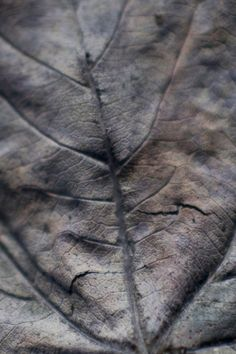 Beauty in Decay - decaying leaf macro; organic textures; natural colour inspiration