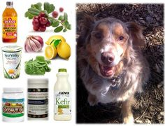 Ottawa Valley Dog Whisperer : Add DIY Natural Supplements to Your Dog's, Cat's Diet to Protect Against the Toxins, Carcinogens in Conventional Flea, Tick, Heartworm, Parasite Preventatives and Treatments