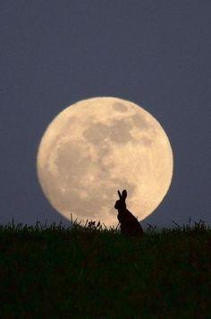 El conejo en la luna