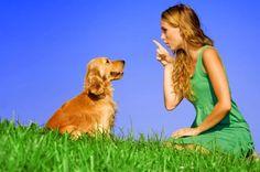 BioOrbis: Cães entendem as palavras ditas a eles, diz estudo...