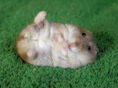 Too chubby to get up! Damn those NOM NOM NOMs!