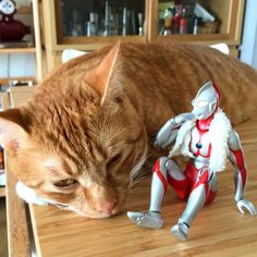 Tiger Cat and Ultraman trying to work out their issues...