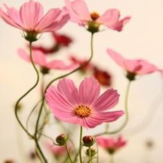 Pixdaus | gorgeous flowers By: crescentmoon