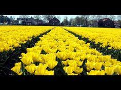 The most beautiful flower fields in the world | Keukenof flower Garden - YouTube