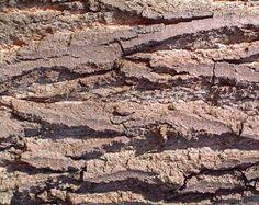 Corteza rugosa /texturas orgánicas