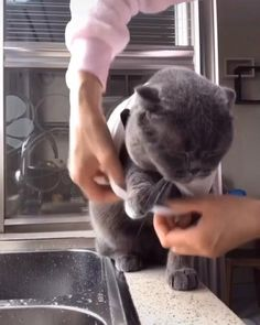 Funny Cute Cats, Cute Baby Cats, Cute Little Animals, Cute Funny Animals, Cute Dogs, Funny Animal Memes, Funny Cat Videos, Cute Animal Videos, Beautiful Cats