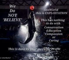 Orcas are simply not ours to use for our entertainment. SeaWorld, along with other marine parks, is all about greed.