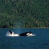 Salt Spring Island, whale watching Beautiful Places To Live, Canada Eh, You're Dead, I Want To Travel, Whale Watching, British Columbia, Travel Ideas, Graham, Vancouver