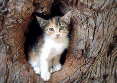 Copyright Zoé Boudou 2015 Petit bébé chat caché dans le creux d'un arbre à Urfa, Kurdistan ;) Baby cat hidden in a tree in Urfa, Kurdistan