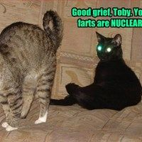 Toxic Waste - LOLcats is the best place to find and submit funny cat memes and other silly cat materials to share with the world. We find the funny cats that make you LOL so that you don't have to. I Love Cats, Crazy Cats, Cute Cats, Funny Animal Memes, Funny Animals, Cute Animals, Animal Funnies, Animal Humour, Puppies And Kitties