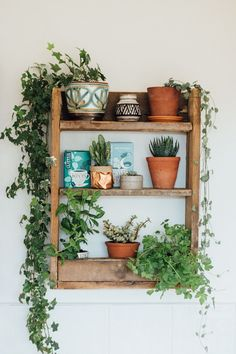 Wooden shelf with potted house plants and cacti