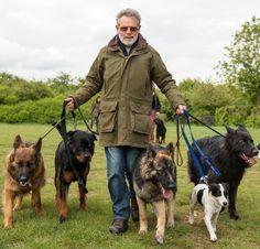 Se você tem um cachorro como amigo de quatro patas, então tem de aprender a ser o líder dele. Confira as nossas dicas :) #cachorro #animais
