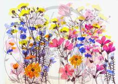 Wildflowers, Hannah Harding