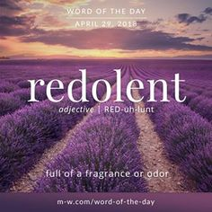Redolent (adj) full of a fragrance or odor Unusual Words, Weird Words, Rare Words, Unique Words, Cool Words, Interesting Words, Perfume Versace, Texts, Inspiration Quotes