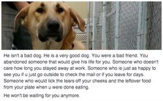 Rescuer Writes Powerful Facebook Message To Person Who Abandoned Their Dog