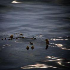 Blæretang ved Agernæs #visitfyn #visitdenmark #fyn #nature #nature_perfection #naturelovers #mothernature #natur #loves_skyandsunset #loveit #denmark #danmark #dänemark #landscape #assensnatur #mitassens #vildmedfyn #fynerfin #vielskernaturen #visitassens #instapic #picoftheday #spring #assens #sea #forår #seaweed