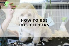 Grooming your dog is now here near as difficult as you might have thought. Find out how to use dog clippers and read our tips on how to cut a dog's hair at home.