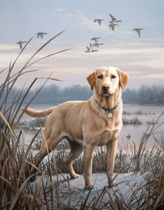 yellow lab | The third, and last, in the dog and duck series is a yellow lab.