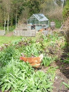 Worcestershire smallholding blog