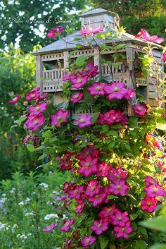 Aiken House & Gardens: Clematis in the Garden... Ville de Lyon clematis growing over an old birdhouse.