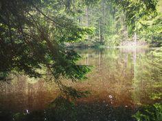 Sumava forest, Boubin, Czech Republic