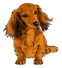 Dog Food Add Ins That looks just like my pretty Ginger Lou.Dog Food Add Ins That looks just like my pretty Ginger Lou Dachshund Drawing, Dachshund Tattoo, Dachshund Art, Long Haired Dachshund, Daschund, Dachshund Zeichnung, Animal Paintings, Animal Drawings, I Love Dogs