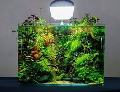The winner of the first Austrian aquascaping contest.