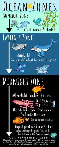 """A fun infographic to help teach kids about ocean zones! Link also includes an upcycled ocean zone craft activity for kids, a free ocean animal printable and more exploration into ocean zones. Illustrations by children's book author """"Everett"""" Taylor. Ocean Activities, Craft Activities For Kids, Craft Kids, Indoor Activities, Summer Activities, Family Activities, Layers Of The Ocean, Ocean Zones, Ocean Habitat"""