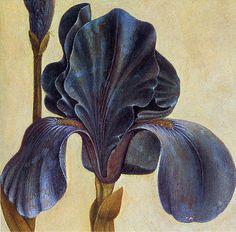 Albrecht Dürer 'Troiana Iris' (Detail)