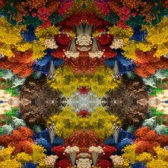 Be Diff - Estampas Abstratas | Caleidoscópio Floral Colorido by Laura Fernandez