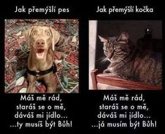 Funny pictures about How dogs and cats think. Oh, and cool pics about How dogs and cats think. Also, How dogs and cats think photos. Love My Dog, What Cat, What Dogs, Animals And Pets, Funny Animals, Cute Animals, Wild Animals, Cat Vs Dog, Funny Animal Pictures