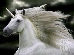Unicorn 66 Photographic Print by Bob Langrish at Art.com