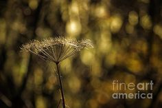 Title  Golden  Artist  Belinda Greb  Medium  Photograph