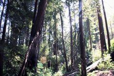 Sunbeams & Redwoods, Big Sur, California | chescaislost