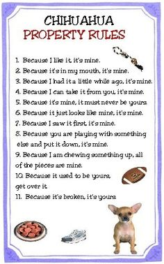Chihuahua Dog Property Rules Magnet VERY FUNNY by tedwards52, $4.79