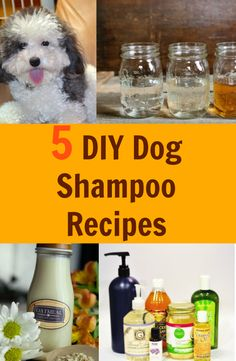 Baking Soda Shampoo: It will Make Your Hair Grow Like It truly is Magic! Baking Soda Shampoo: It will Make Your Hair Grow Like It truly is Magic! Homemade Dog Shampoo, Puppy Shampoo, Diy Shampoo, Homemade Facials, Diy Pet Shampoo Dogs, Best Dog Shampoo, Homemade Conditioner, Clarifying Shampoo, Baking Soda Shampoo